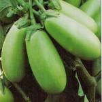 Eggplant Green -