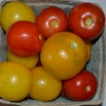 Tomatoes -Yellow