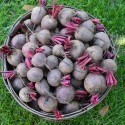 Benefits of Red Beets