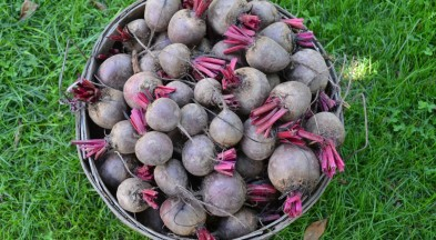 Organic Produce Today