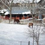 New Creations Farm Winter Scene
