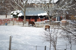 New Creations Farm Winter Scene