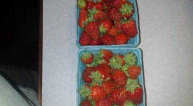 Fresh Organic Sparkle Strawberries