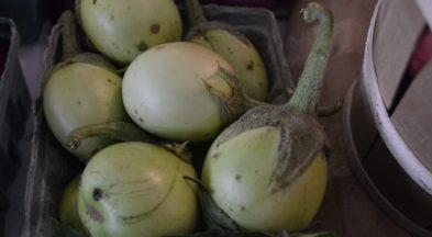 Eggplant today