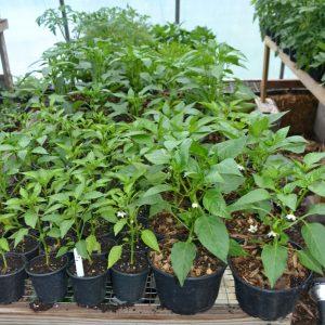 Plants, Veggie