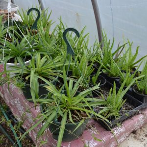 Plants, House