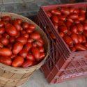Fresh Canned Organic Medium Salsa For Sale
