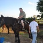 Horse Memorial Page