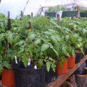 Nutrient Dense Organic Plants